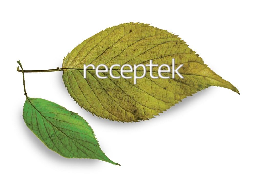 receptek_leaf
